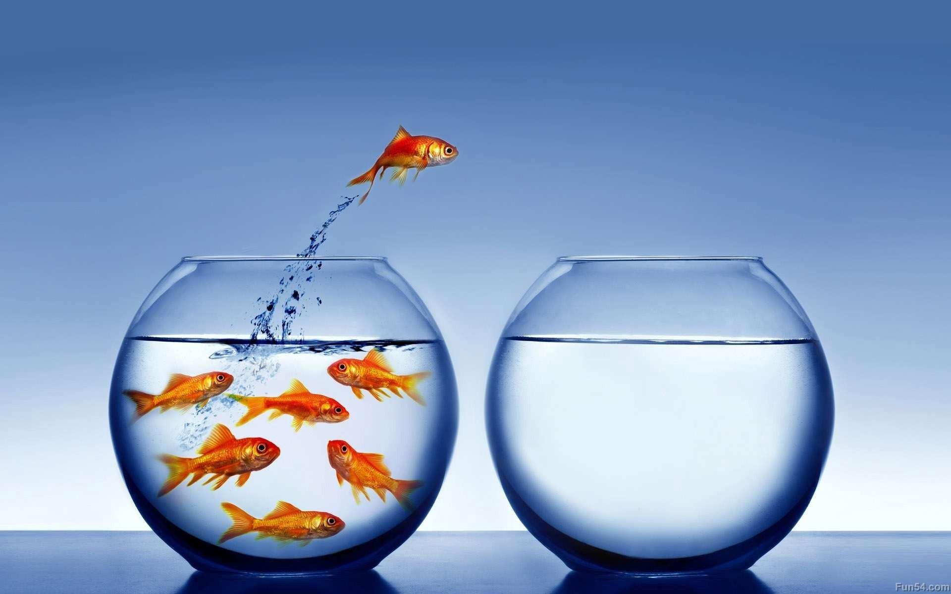 strategi promosi bisnis action